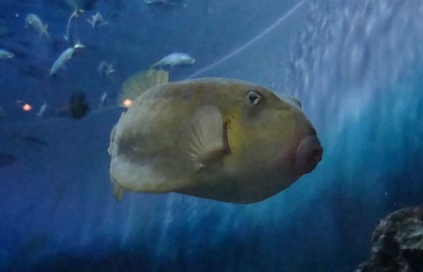 水いたつて清ければ底に 魚すまず、人いたつて 賢なれば内に友なし。