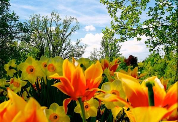 愛は生命の花である