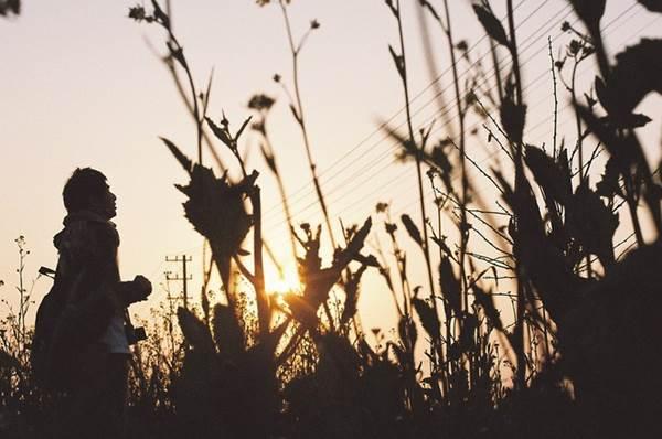 「春」の名言集(人生や仕事や人間関係に悩んだら)