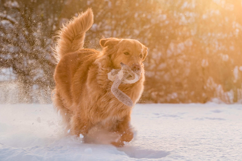 愛犬との別れを癒やす名言・格言集